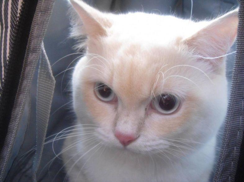 貓接種防疫針