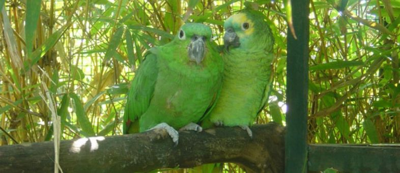 Why feed pellets to your Parrot