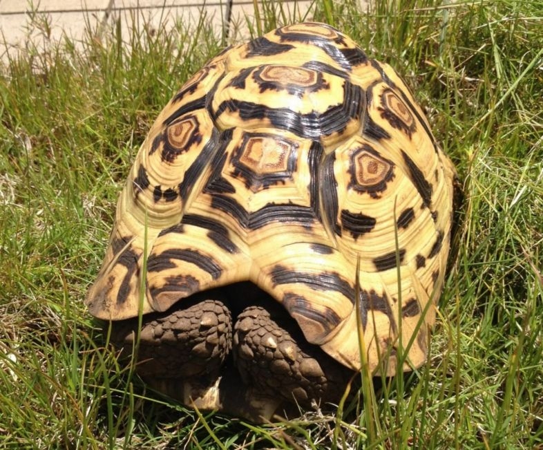 Five important points to consider when buying a Tortoise