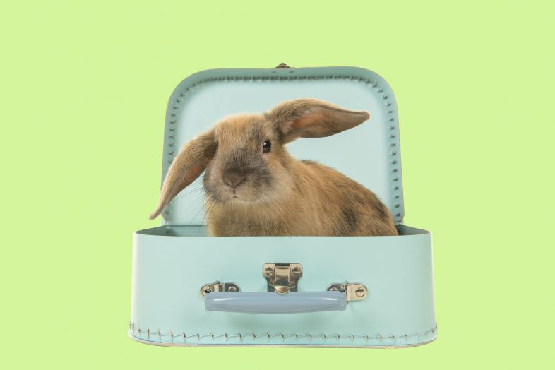 Holiday Time : What to Do with your Rabbit ?